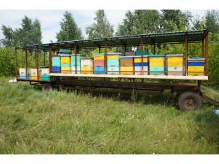 Платформа с пчелами